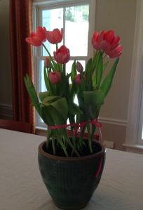 Pink Tulip Sheila