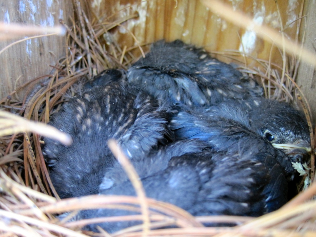 For the Birds – The Amherst NH Garden Club