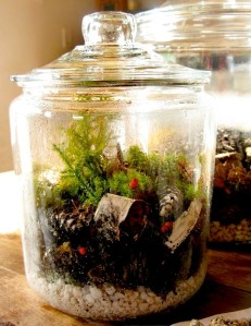 Terrarium - Make Your Own!