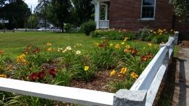 Daylilies in Brick School Garden (July 2016)