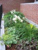 the hidden garden at Town Hall - Summer 2014