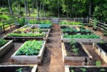 Raised-Beds