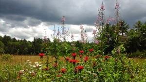 Turbulent clouds & bright sun with wildflowers- red bee balm & pink fireweed.